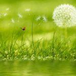 la biodiversidad y los ecosistemas