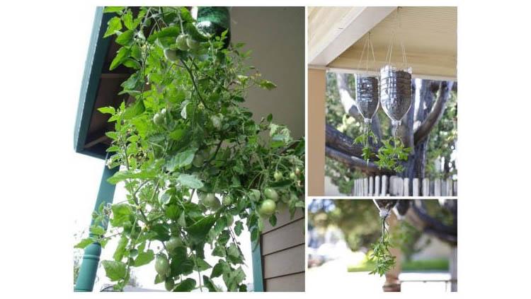 Macetas para cultivar tomates