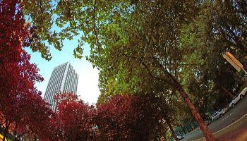 por qué hay que plantar árboles para salvar el planeta