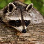 protección y cuidado de los animales