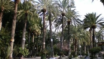 palmeral de Elche y desarrollo sostenible