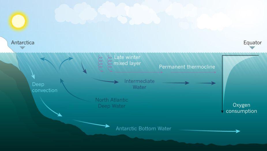 El estudio de Andeas Oschlies demuestra que está disminuyendo el oxígeno en los océanos, con unas graves consecuencias para la vida marítima.