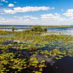 ¿Qué es un humedal? Son entornos cubiertos de agua que son de vital importancia para la vida en el planeta