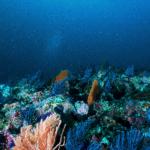 El avance de la minería submarina podría constituir una de las nuevas y más extensas amenazas para los ecosistemas marinos del planeta.