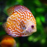 Un estudio publicado en Proceedings de la Royal Society B revela la creación de nuevas especies marítimas por los cambios de temperatura.