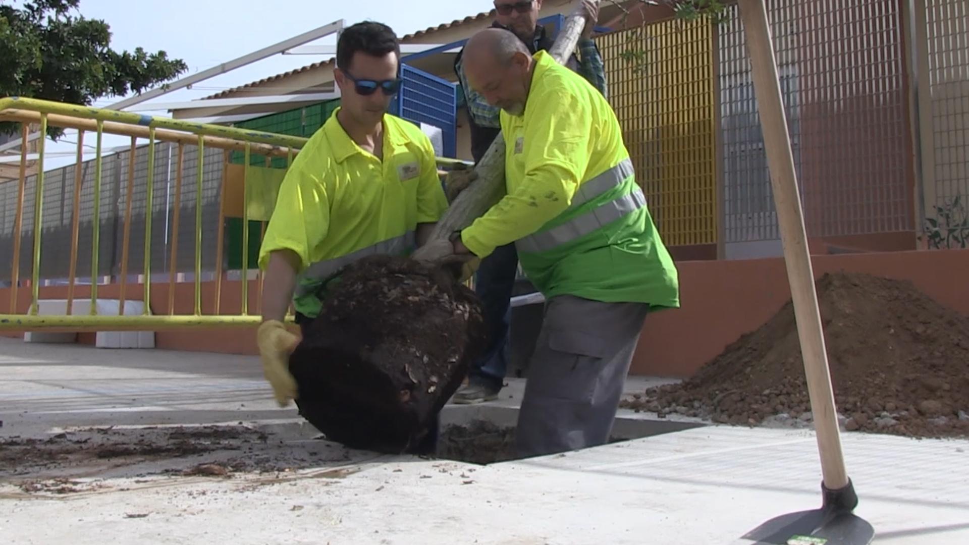 100 nuevos árboles en Cartagena con «Sembrando Oxígeno»