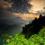 Día Internacional de los Bosques para luchar contra la deforestación