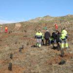 Fundación Aquae está comprometida a compensar sus emisiones de CO2 a través de un proyecto de plantación de árboles que arrancó en 2015