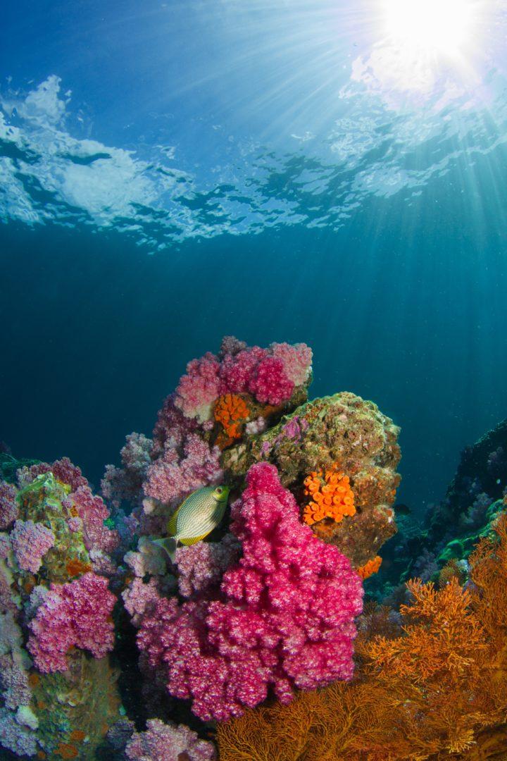 zonas oceánicas o zonas del océano