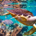 cuántas especies están en peligro de extinción