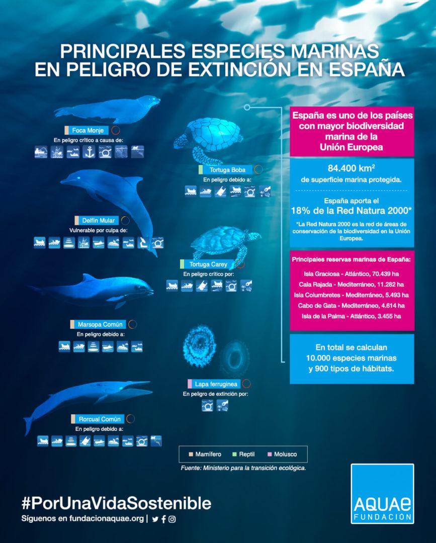 Especies marinas en peligro de extinción en España