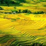 Alimentos y cambio climático
