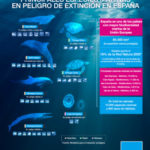 Animales marinos en peligro de extinción en España debido a causas como la sobrepesca