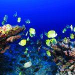 efectos del cambio climático en los océanos