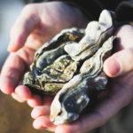 La acidificación de los océanos es una consecuencia del cambio climático. Un efecto devastador para los moluscos bivalvos como las ostras.