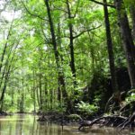 qué es un manglar