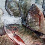 consumo de pescado y sobrepesca