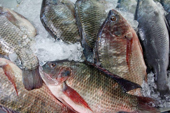 Consejos para un consumo responsable de pescado y marisco