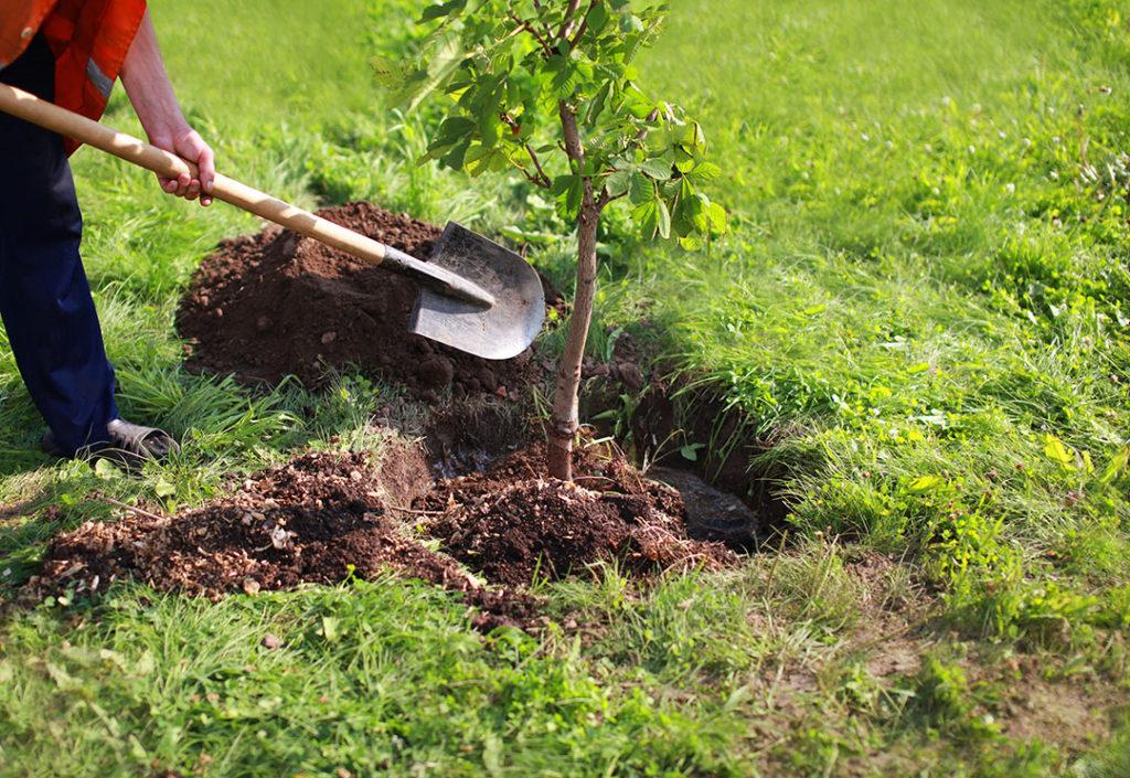 Plantar árboles contra el cambio climático