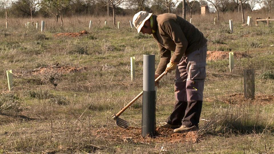 Sembrando Oxígeno es un proyecto que tiene como objetivo plantar árboles para recuperar masa forestal y contribuir a la lucha contra el cambio climático
