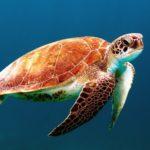qué es la pesca fantasma y amenazas para la biodiversidad marina