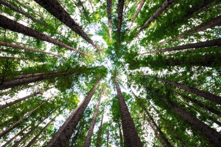 'Sembrando O2', un proyecto para compensar las emisiones de CO2