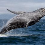 El valor de una ballena
