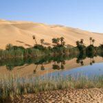 Una investigación ha explorado cómo extraer agua del aire del desierto en base a las plantas e insectos que viven en condiciones extremas.