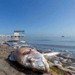 ¿Por qué no hay suficiente oxígeno en el Mar Menor?