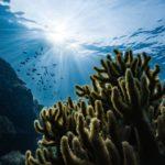 Los océanos están absorbiendo más CO2 del previsto