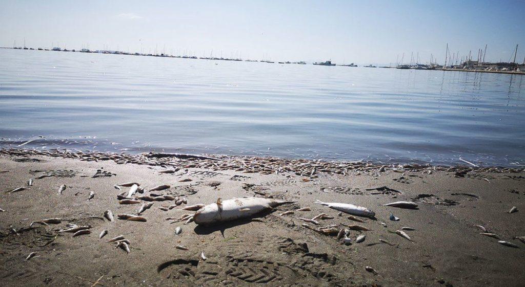 Decenas de miles de peces han aparecido muertos en el Mar Menor (Murcia), debido a la falta de oxígeno en el agua.