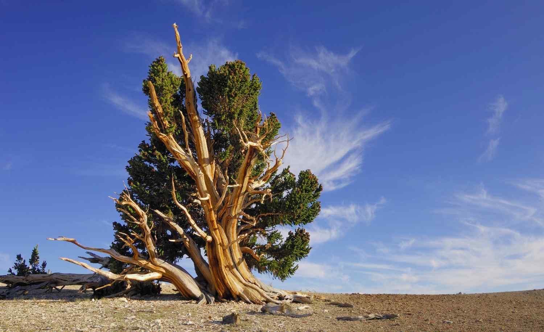 ¿Cuánto sabes de bosques?
