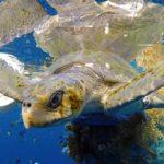 Redes fantasmas: una amenaza para los océanos