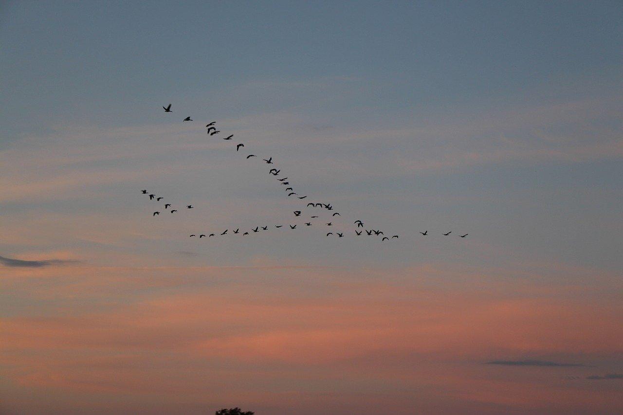 Cómo afecta el cambio climático a las aves