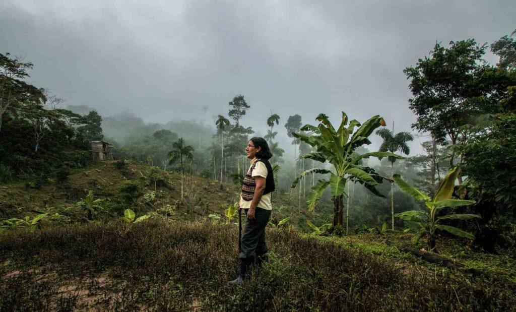 pérdida o degradación de ecosistemas y cómo llegar a la sostenibilidad desde la justicia y equidad