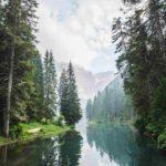 Bosques, solución contra emisiones de carbono y cambio climático