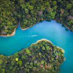 La pérdida de biodiversidad: un coste de 140 billones
