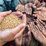 ¿Cambio climático y alimentación están relacionados?