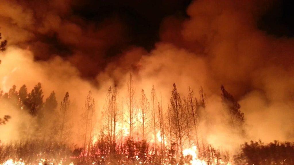 Los incendios en Australia amenazan la biodiversidad