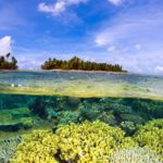 El carbono azul, importante contra el cambio climático