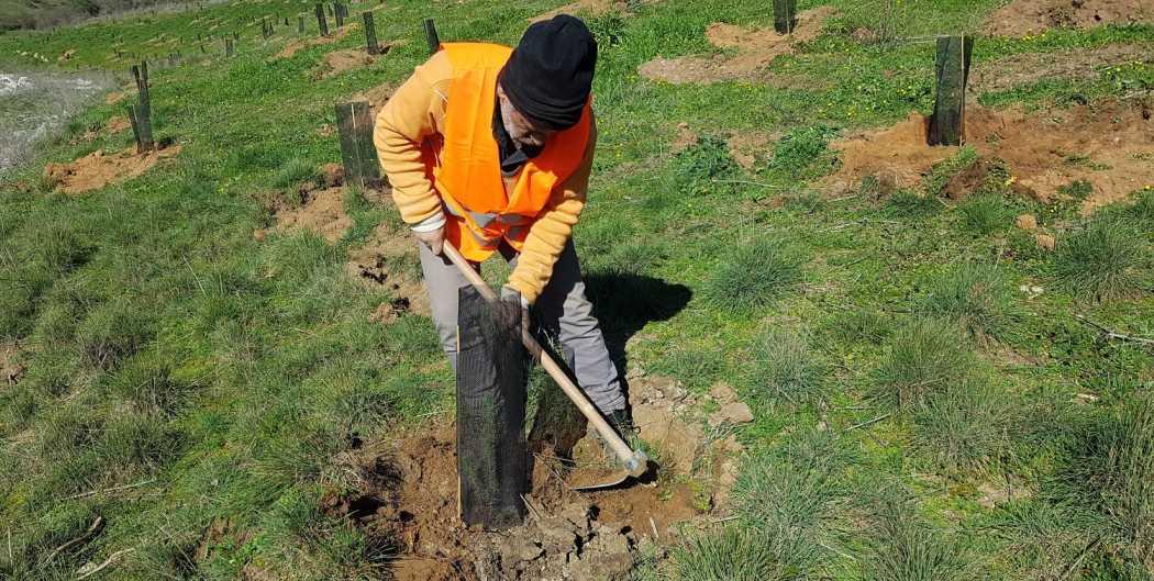 Plantamos 750 árboles en Zamora para luchar contra el cambio climático