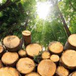 ¿Qué es la biomasa? Una energía orgánica