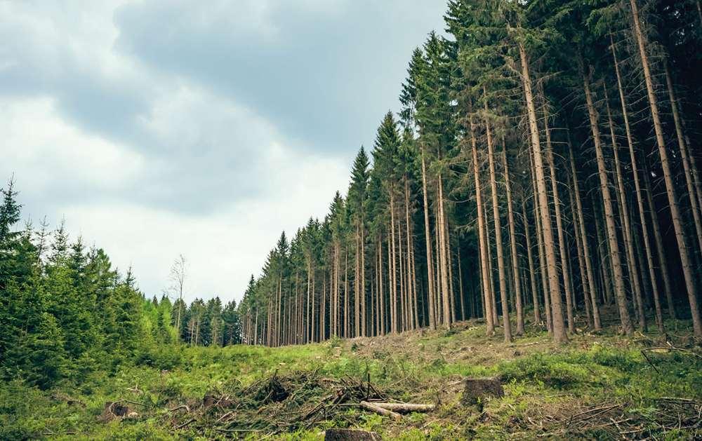 ¿Qué es la biomasa? Una energía sostenible