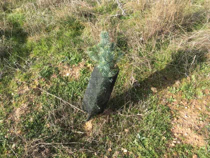 Éxito de la reforestación en Valderrey (Zamora)