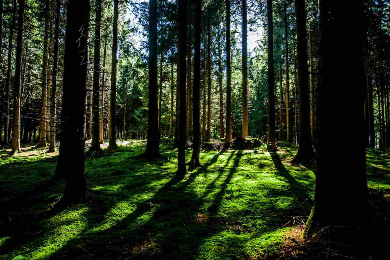 Los bosques sostenibles actúan como sumideros de carbono con el fin de mitigar los efectos del cambio climático