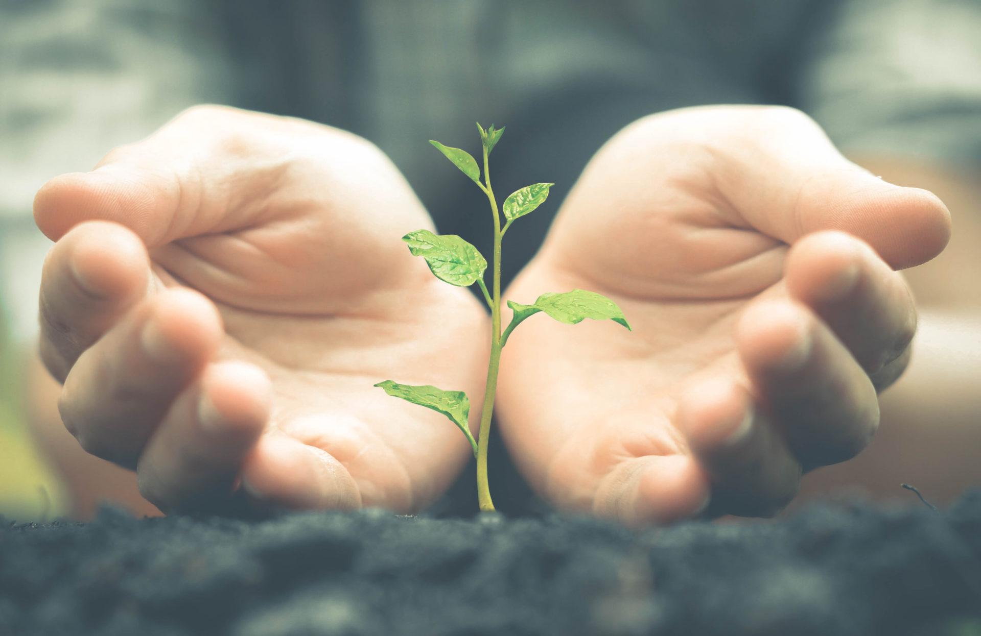 ¿Cómo reducir la huella ecológica?