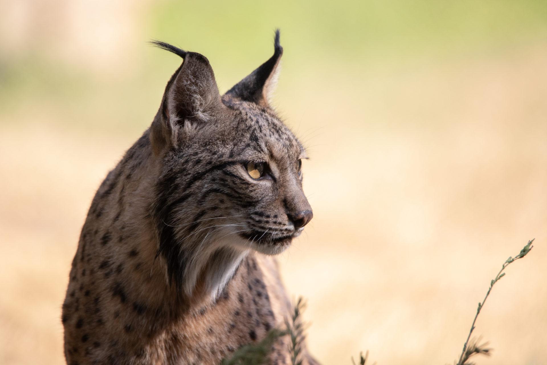 Conoce cuánto sabes sobre los animales en peligro de extinción y la importancia de preservar su supervivencia