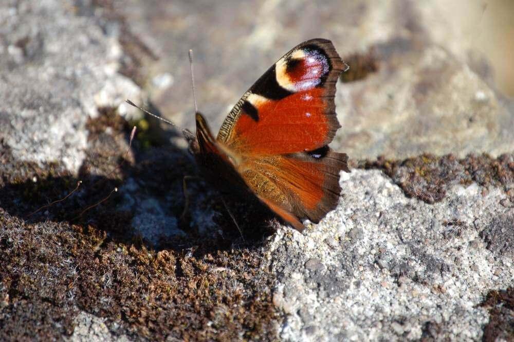 biodiversidad cuestionario