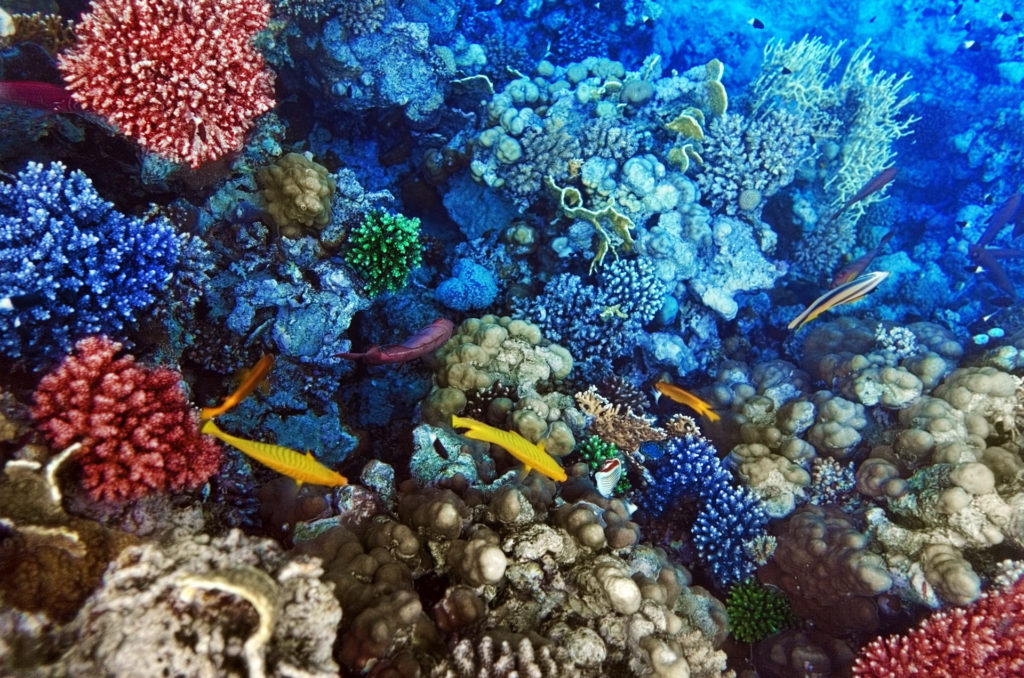 Las Áreas Marinas protegidas pretende salvaguardar la diversidad biológica de nuestras profundidades oceánicas