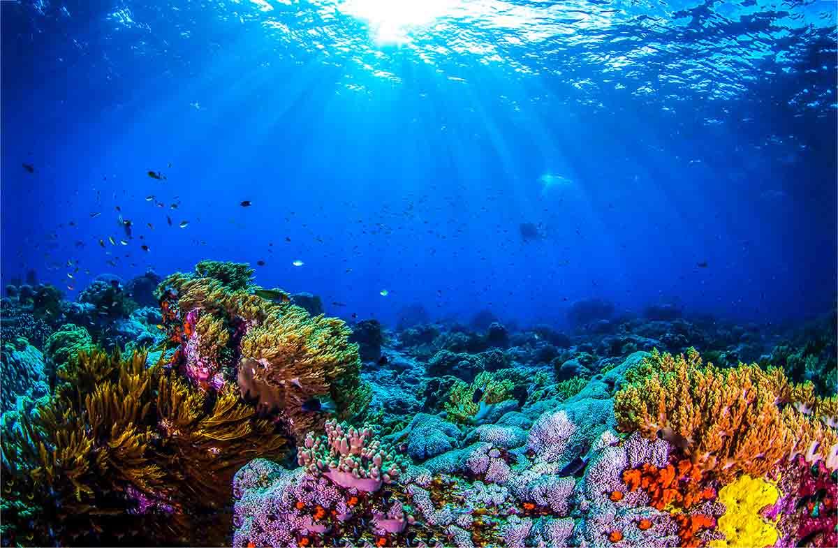 importancia de los océanos, Ana Payo